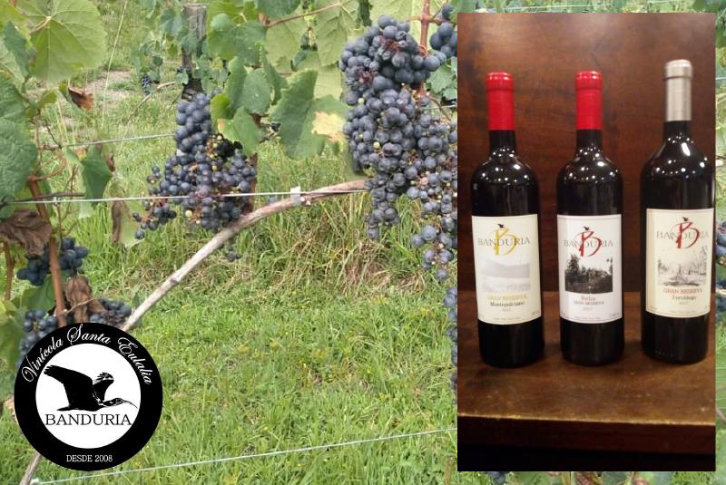 Top 3 vinhos catarinenses: conheça os vinhos Banduria